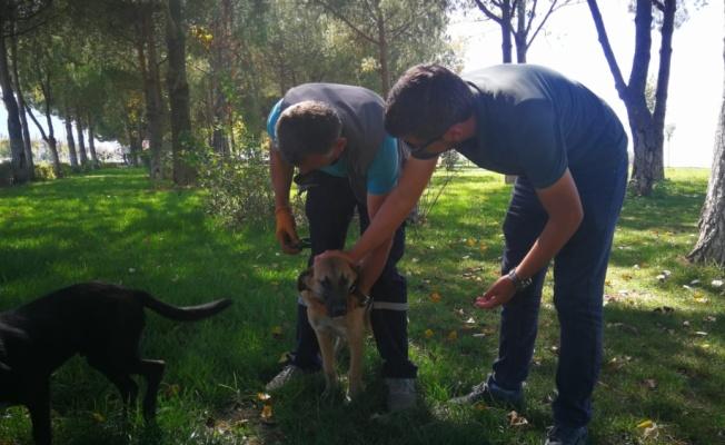 Sokak köpeğinin burnuna batan olta iğnesi belediye ekiplerince çıkarıldı