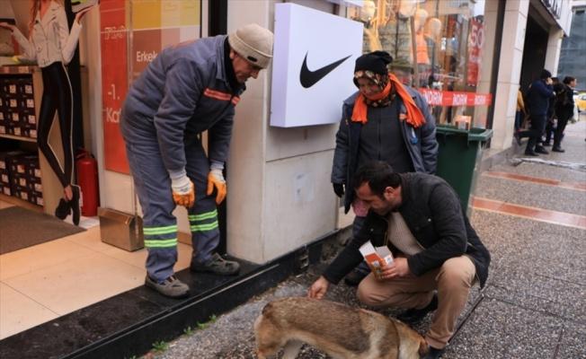 Yalova'da temizlik personelleri sokak hayvanlarını besliyor
