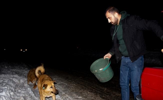 Gündüz pilav satıp gece sokak hayvanlarını besliyor