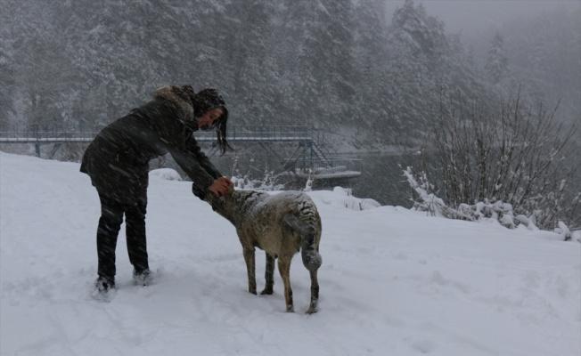 Pazaryeri Belediyesi'nden yaban hayvanlarına yem desteği