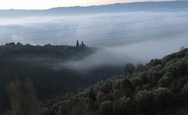 Sakarya, Kocaeli ve Düzce'de yoğun sis etkili oldu