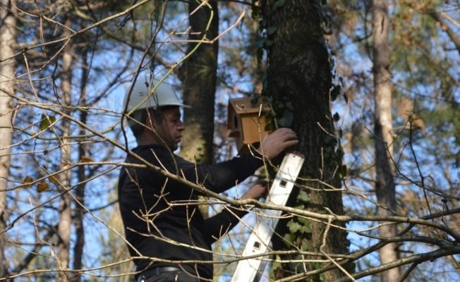 Sakarya'da teknik lise öğrencilerinin yaptığı kuş yuvaları ormanlık alanda ağaçlara yerleştirildi