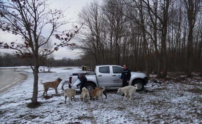 Tekirdağ'da belediye, sokak hayvanları için 142 noktaya yiyecek bıraktı