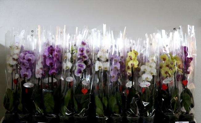 Yalova'daki çiçek mezatlarında