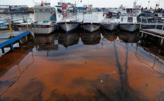 Plankton çoğalması deniz suyunu turuncuya dönüştürdü