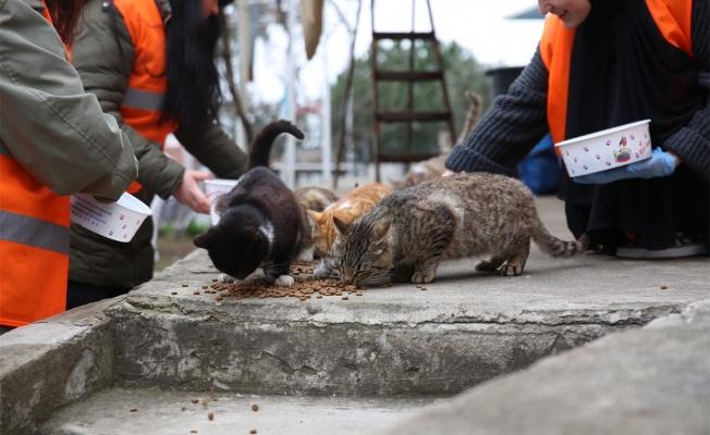Çayırova'da sokak hayvanlarına mama dağıtılıyor