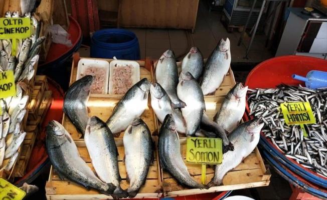 Marmaralı balıkçılar bu sezon umduğunu bulamadı