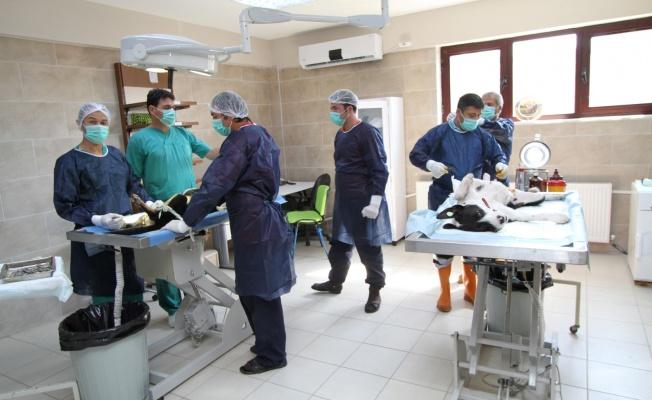 4 ayda bin 809 yaralı ve hasta sokak hayvanı tedavi edildi