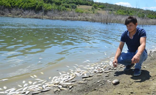 Çok sayıda ölü balık kıyıya vurdu