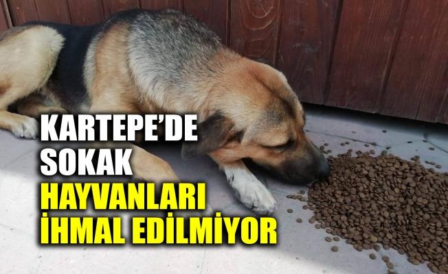 Kartepe'de sokak hayvanları ihmal edilmiyor