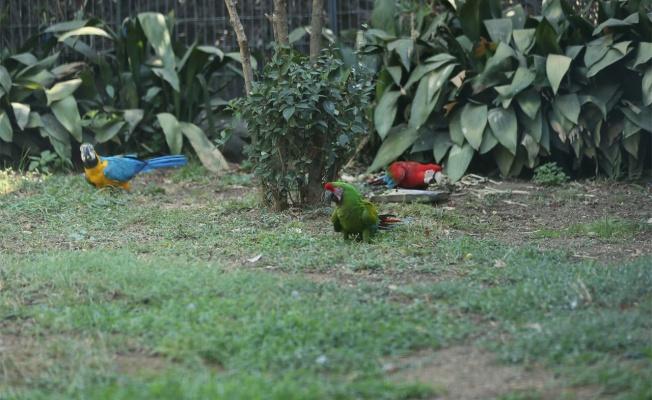 Darıca Faruk Yalçın Hayvanat Bahçesi yüzlerce kuşa yuva oldu