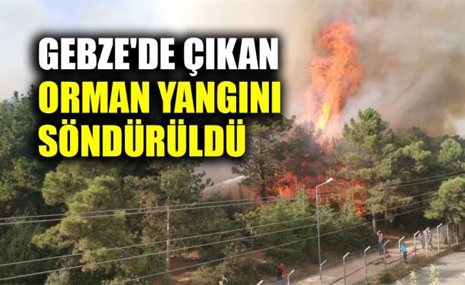 Gebze'de çıkan orman yangını söndürüldü