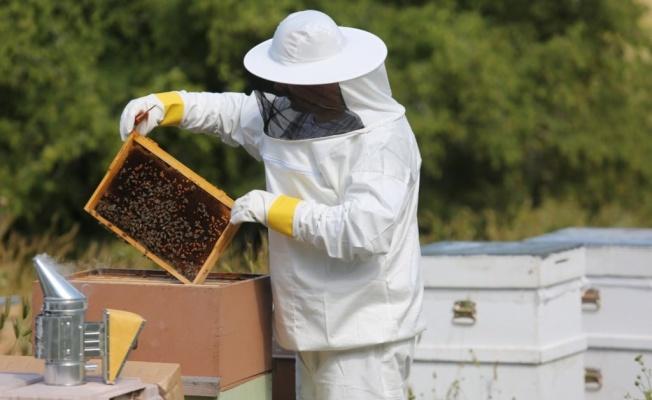 Kovandan Sofraya Arıcılık ve Arı Ürünleri Sempozyumu yapılıyor