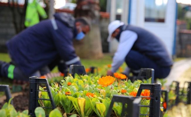Çayırova'da mevsimlik çiçek dikimi