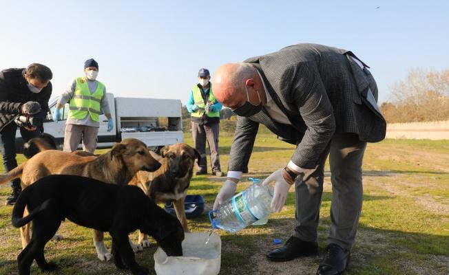 Darıca'da sokak hayvanlarına 14 ton mama desteği