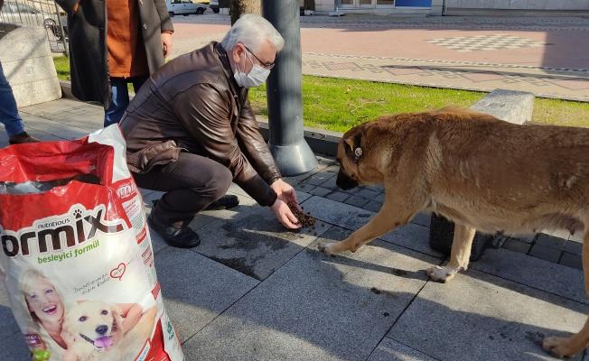 Gölcük'de kısıtlamada sokak hayvanlarını yalnız bırakmadılar