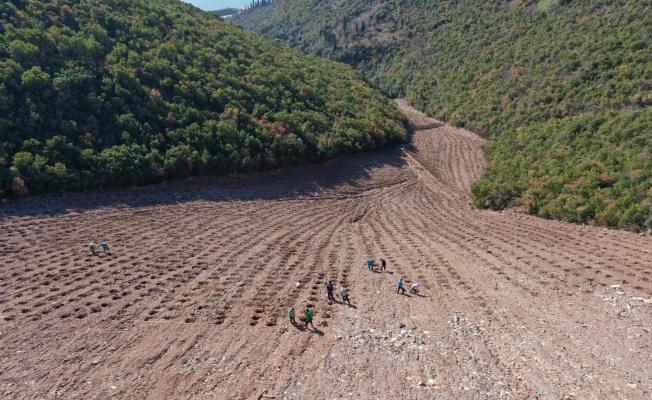 Hereke dolgu alanı 8 bin ağaçla yeşillendiriliyor