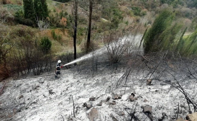 Kocaeli'de çıkan yangında 2 dönüm ormanlık alan zarar gördü