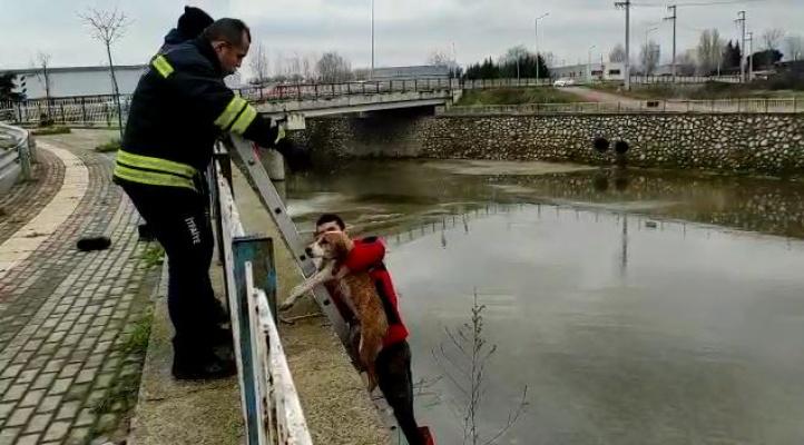 Dereye düşen köpekleri itfaiyeciler kurtardı