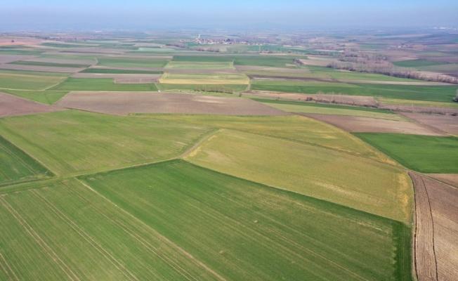 Edirne'de yüksek kesimlerde etkili olan zirai don erken ekim yapılan buğday ve arpada zarara neden oldu