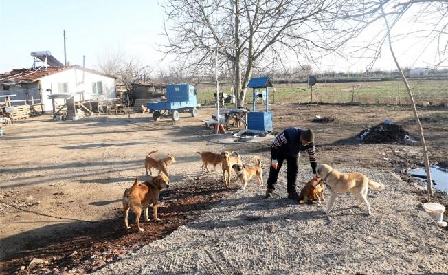Emekli postacı salgın döneminde bahçesini sokak hayvanlarına açtı