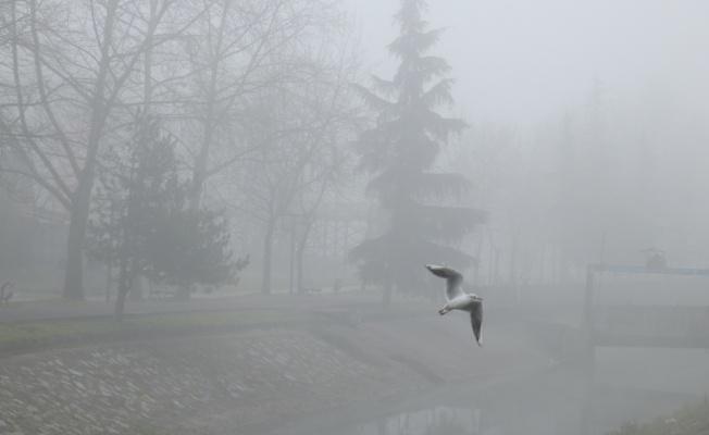 Sakarya'da sis etkili oluyor
