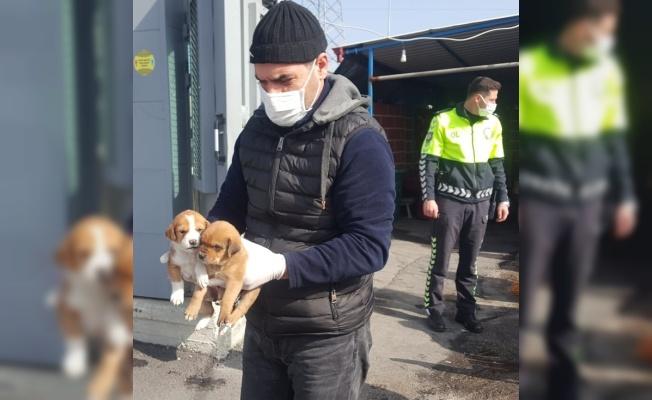Sakarya'da uygulama noktasına gelen köpek yavrularına polisler sahip çıktı