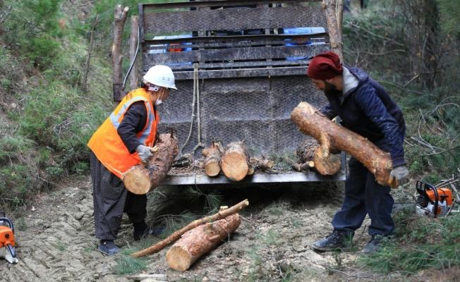 Ağaç kesme motoruyla ormanların bakımını yapan
