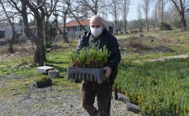 Tekirdağ'daki Ganos Dağı etekleri köylülerin diktiği fıstık çamı fidanlarıyla güzelleşecek