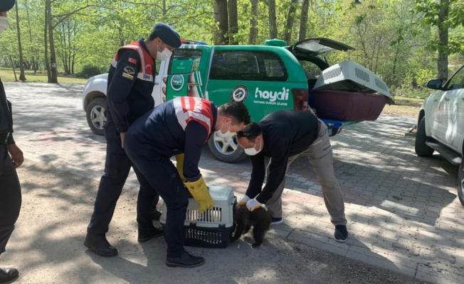 Yalova'da jandarmanın ormanlık alanda bulduğu yavru ayı koruma altına alındı