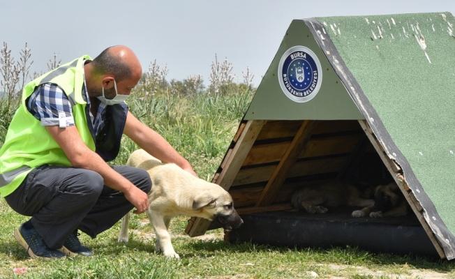Bursa Büyükşehir Belediyesi öncülüğündeki gönüllüler, sokak hayvanlarını besledi