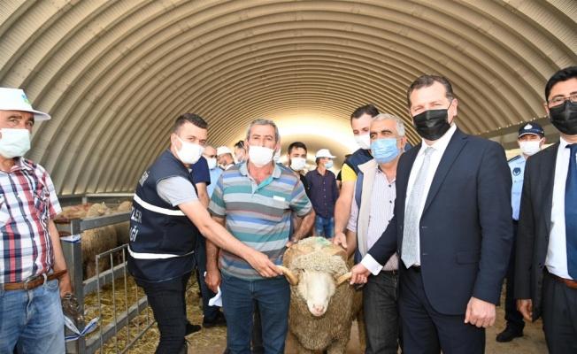 Balıkesir Büyükşehir Belediyesi üreticiye damızlık koç dağıttı