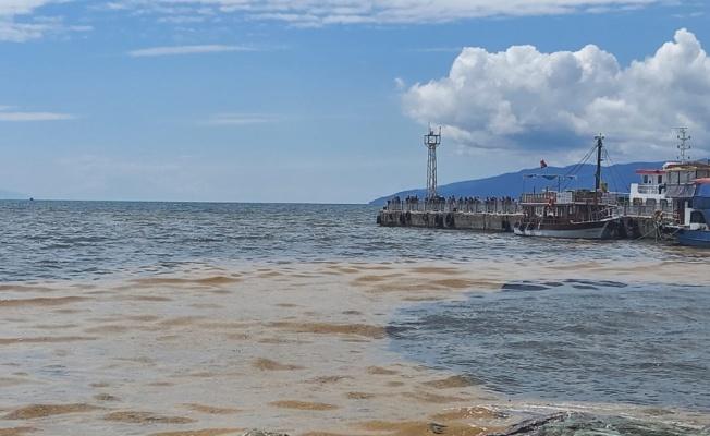 Gemlik Körfezi'nde deniz salyası kıyı bölgelerde yoğunlaştı