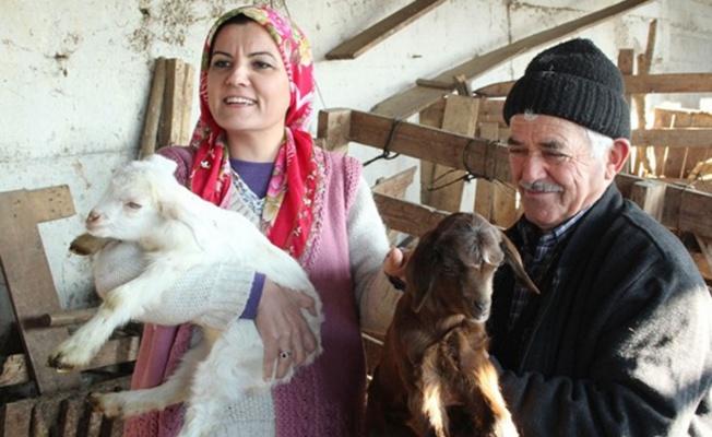 Kocaeli İzmit'te süt üreticilerine destek
