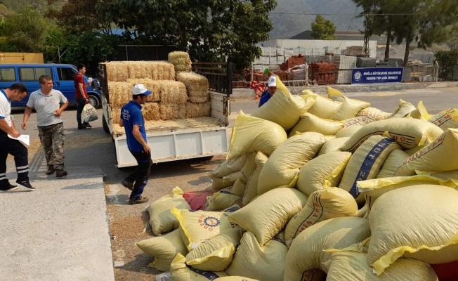 Muğla'dan 368 ton hayvan besini desteği