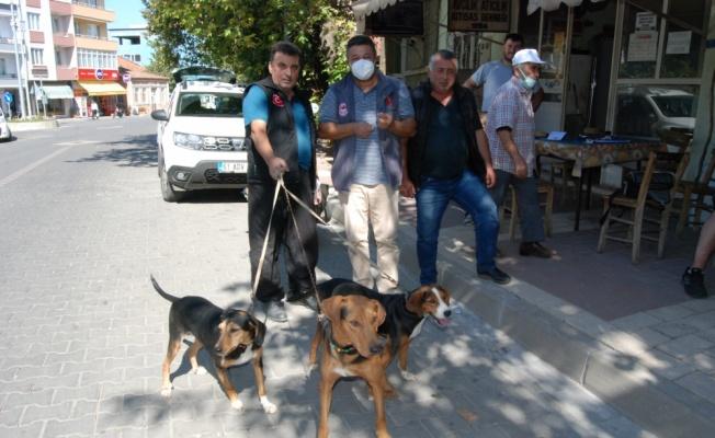 Bayramiç'te av köpeklerine kuduz aşısı yapıldı