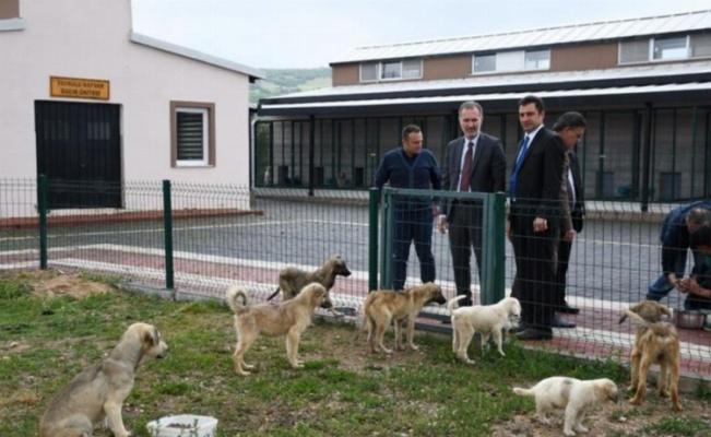 Bursa'da hayvan kısırlaştırmasında İnegöl birinci sırada