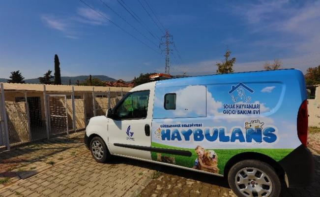 """İzmir Güzelbahçe'de can dostları için """"Haybulans"""""""