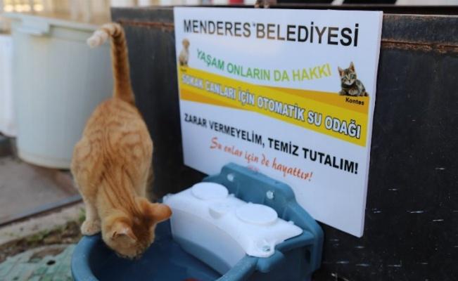 İzmir'in Menderes ilçesinde sokak hayvanları için su kabı