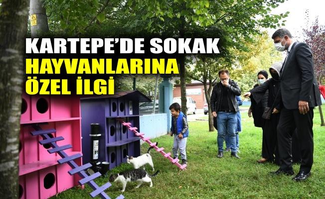 Kartepe'de sokak hayvanlarına özel ilgi