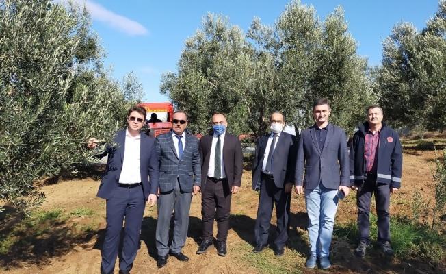 Kemallı Köyü 1. Zeytin Hasadı Festivali düzenlendi