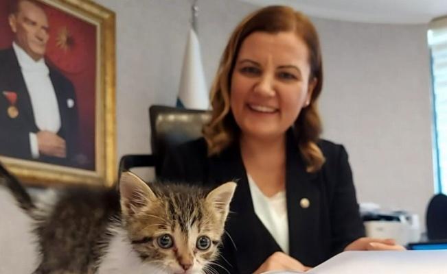 Kocaeli'de İzmit Belediyesi minik kediyi sahiplendi