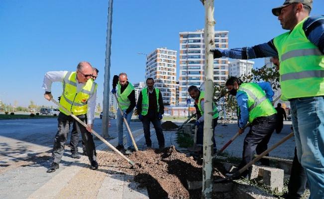 Sivas'ta 5 bin ağaç toprakla buluştu