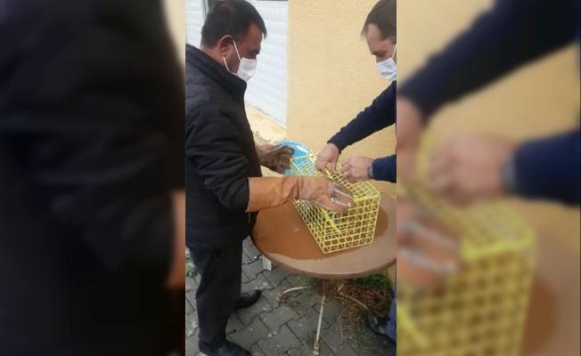 Tekirdağ'da yaralı halde bulunan baykuş tedavisinin ardından doğaya salındı