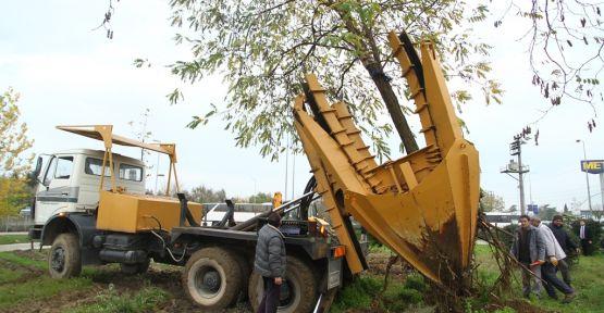 Ağaçlara zarar verilmeden başka yere dikiliyor