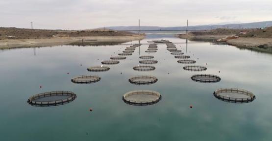 Baraj ve göletlerde 30 farklı balık türü yaşıyor
