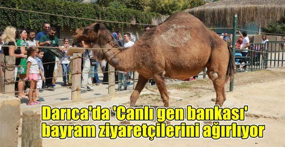 Darıca'da 'Canlı gen bankası' bayram ziyaretçilerini ağırlıyor