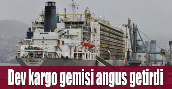 Dev kargo gemisi angus getirdi