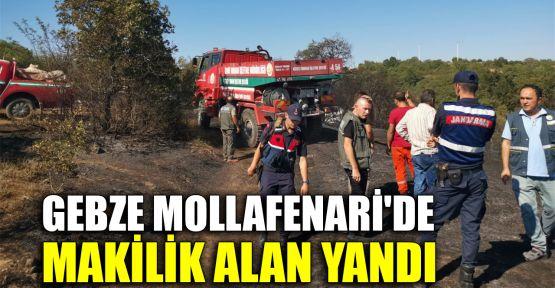 Gebze Mollafenari'de makilik alan yandı