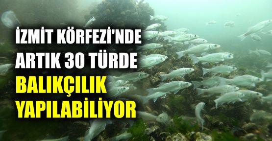 İzmit Körfezi'nde artık 30 türde balıkçılık yapılabiliyor